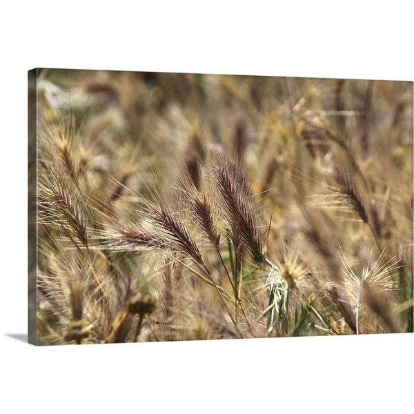 """Close up of wild wheatfield"" Canvas Wall Art"