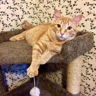 New Cat Condos Wood/Carpet/Sisal Rope 33-inch Corner Roost Sturdy Cat Tree