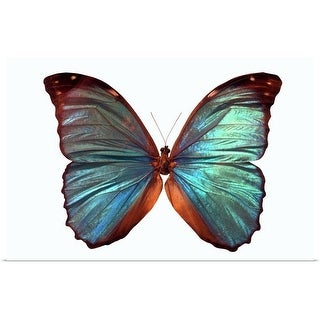 """""""Butterfly"""" Poster Print"""