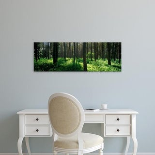 Easy Art Prints Panoramic Images's 'Coniferous trees in a forest, Thetford Forest, Norfolk, England' Canvas Art