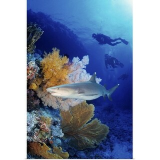 """""""Shark in the Great Barrier Reef, Australia"""" Poster Print"""