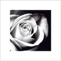 ''White Rose'' by Michael Banks Floral Art Print (15.75 x 15.75 in.)