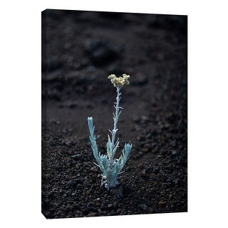 """PTM Images 9-108355  PTM Canvas Collection 10"""" x 8"""" - """"Hawaii Flower C"""" Giclee Flowers Art Print on Canvas"""