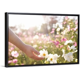 """Pink and white cosmos flower field with hand."" Black Float Frame Canvas Art"