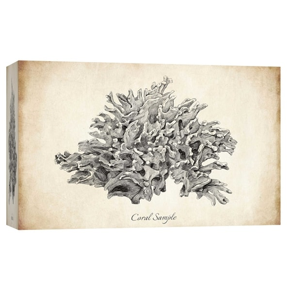 """PTM Images 9-103728 PTM Canvas Collection 8"""" x 10"""" - """"Coral Sample"""" Giclee Corals Art Print on Canvas"""