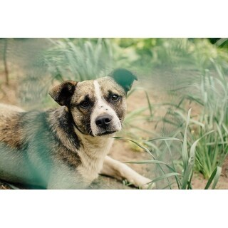 White Dog Animal Photograph Art Print