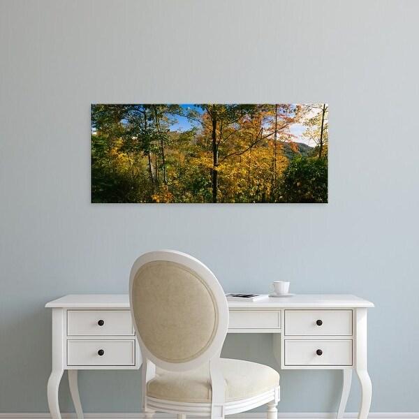 Easy Art Prints Panoramic Image 'Trees, Blue Ridge Mountains, Outside of Spruce Pine, North Carolina' Canvas Art