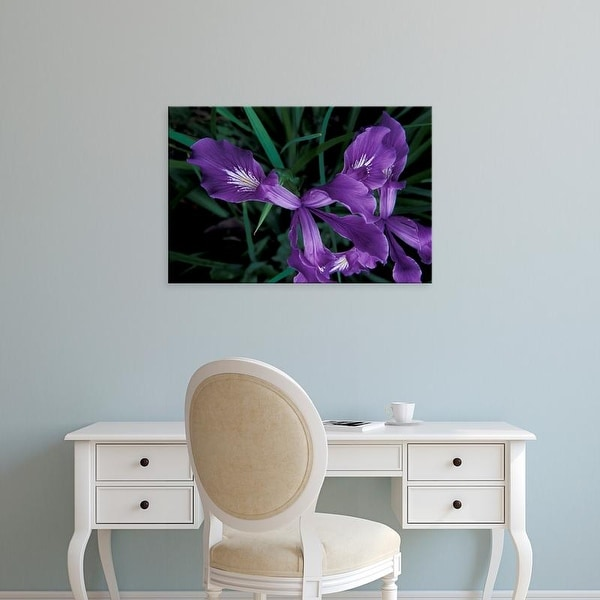 Easy Art Prints Michele Westmorland's 'Oregon Coast Wild Iris' Premium Canvas Art