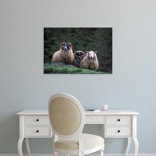 Easy Art Prints Gavriel Jecan's 'Scottish Sheep' Premium Canvas Art