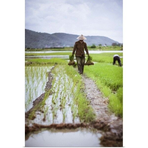 """Farmer at work in rice paddy, North Vietnam"" Poster Print"