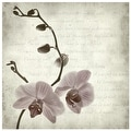 ''Retro Orchid'' by Anon Fairfield Art Publishing Art Print (16.5 x 16.5 in.) - Thumbnail 0