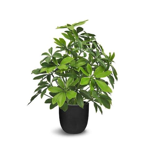 "Faux Botanical Baby Schefflera in Green Finish 20"" Height - 20""H"