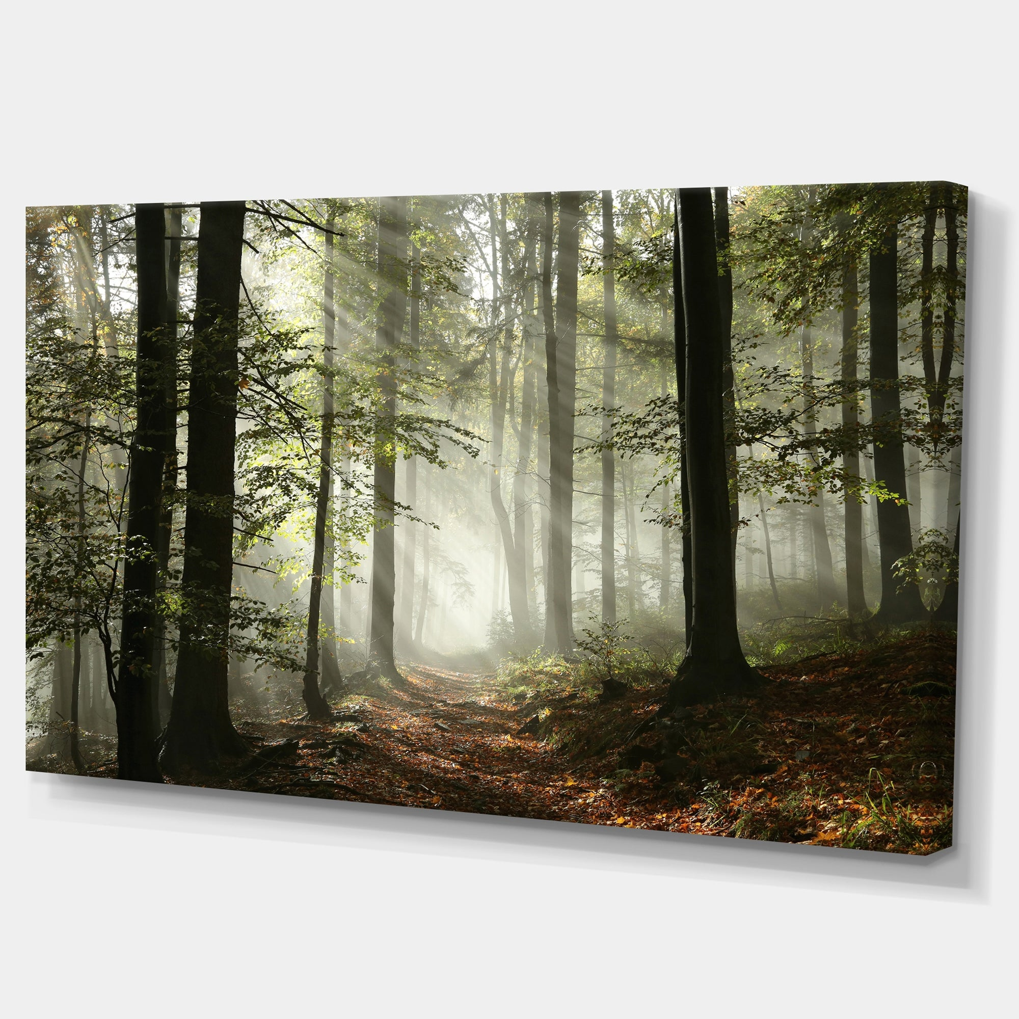Designart Light In Dense Fall Forest With Fog Landscape Canvas Art Print On Sale Overstock 12101979