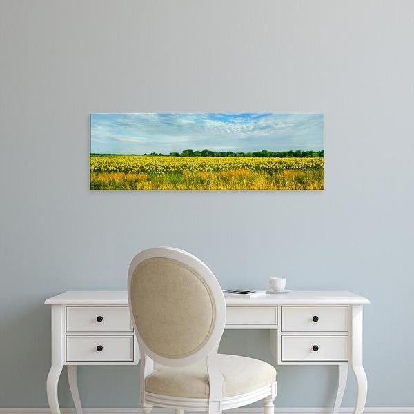 Easy Art Prints Panoramic Images's 'Sunflower field, Melvin, Livingston County, Illinois, USA' Premium Canvas Art