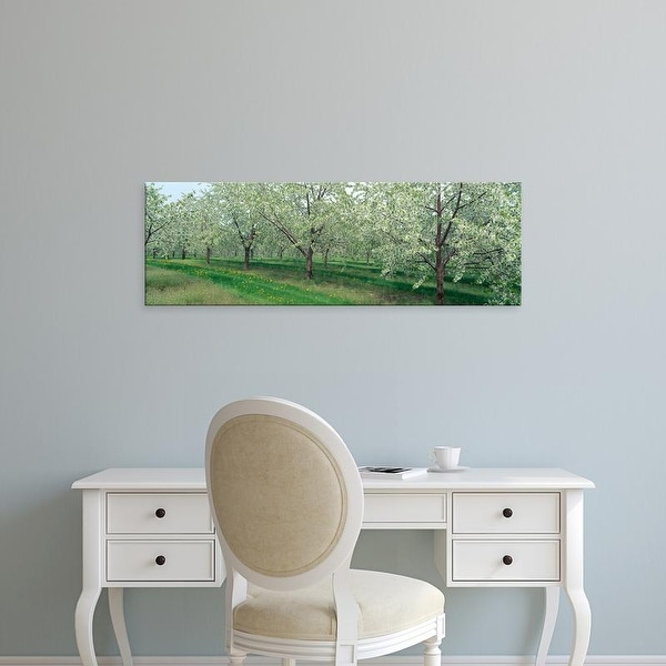 Easy Art Prints Panoramic Images's 'Cherry Trees' Premium Canvas Art