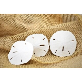 9GreenBox - 3 Real Round Sand Dollar - Great For Ornament Decorating