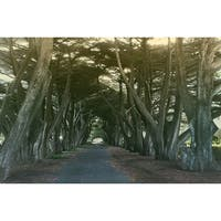 Road And Trees Photograph Art Print