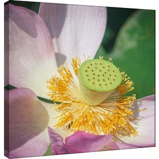 """PTM Images 9-101263  PTM Canvas Collection 12"""" x 12"""" - """"Lotus Lily 1"""" Giclee Lotuses Art Print on Canvas"""