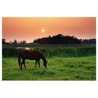"""""""Horse grazing in the fields a warm sunset, Alberta, Canada"""" Poster Print"""