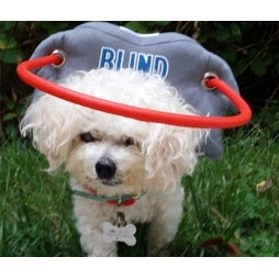 Muffin's Halo My Blind Dog Style