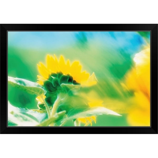 """Soft focus of yellow flower"" Black Framed Print"