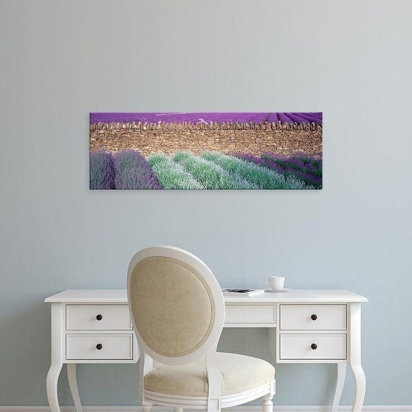 Easy Art Prints Panoramic Images's 'Lavender growing beside dry