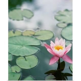 """Lotus in pond"" Poster Print"