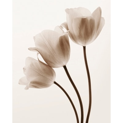''Composition with Three Tulips'' by Tim Smith Floral Art Print (11.75 x 9.5 in.)