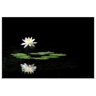 """""""Reflection of water lily in water"""" Poster Print"""