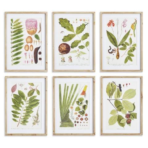 Leaf Botanical Study