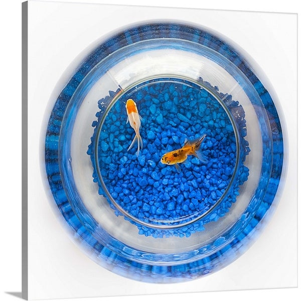 """""""Two goldfish inside a bowl with blue pebbles"""" Canvas Wall Art"""