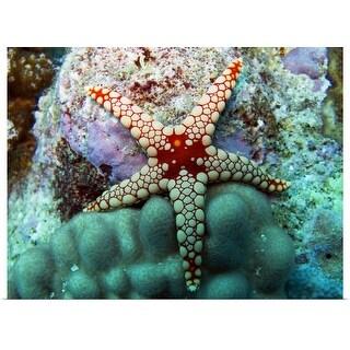 """A starfish, the Maldives."" Poster Print"