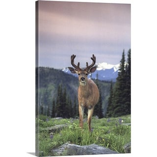 """Deer,  Olympic National Park  Washington  USA"" Canvas Wall Art"