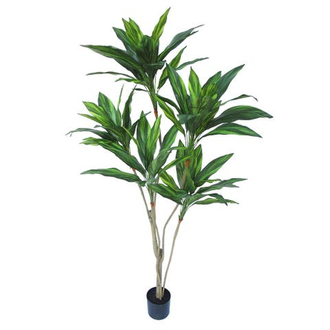 5.5ft Tropical Cordyline Ti Leaf Tree in Pot