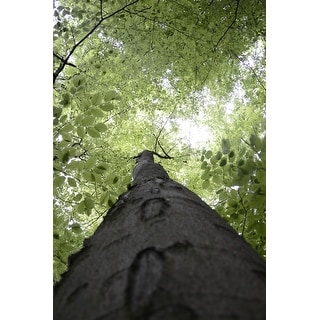 Tree Canopy In Forest Canvas Wall Art Photograph