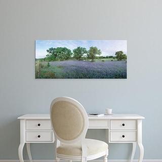 Easy Art Prints Panoramic Images's 'Field of Bluebonnet flowers, Texas, USA' Premium Canvas Art