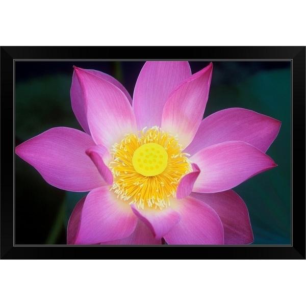 """""""Lotus flower"""" Black Framed Print"""
