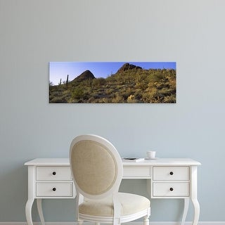 Easy Art Prints Panoramic Images's 'Cactus in a desert, Teddy Bear Cholla Pass, New Mexico, Arizona, USA' Canvas Art