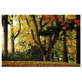 """""""Autumn Color Trees"""" Poster Print"""
