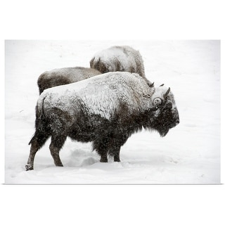 """""""Bison covered with snow"""" Poster Print"""
