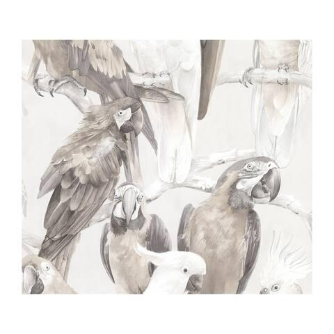 Viola Grey Macaw Wallpaper - 20 x 396 x 0.025