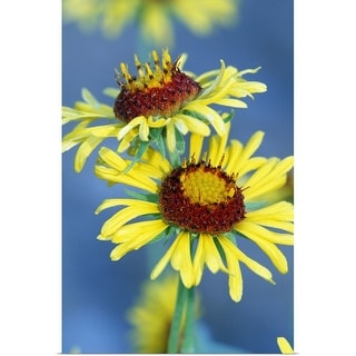 """""""Yellow Flowers In Bloom"""" Poster Print"""