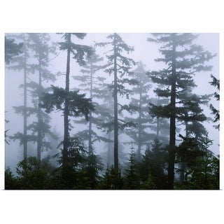 Poster Print entitled Silhouette of trees with fog in the forest, Douglas Fir, Hemlock Tree, Olympic Mountains, Olympic