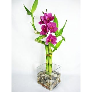9GreenBox - Lucky 'Bamboo' Spiral Style w/ Silk Flowers and Glass Vase