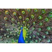Peacock - LP Photography (100% Cotton Towel Absorbent)