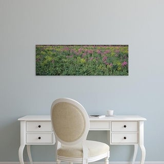 Easy Art Prints Panoramic Images's 'Field of flowers in bloom, Marion County, Illinois, USA' Premium Canvas Art