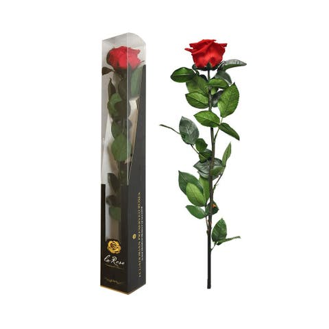 Single Ecuadorian Preserved Rose Stemmed, Height 50 cm, Gift Boxed