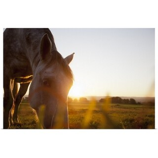 """Hose grazing in rural field"" Poster Print"