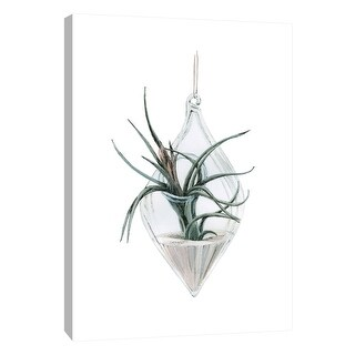 """PTM Images 9-105442  PTM Canvas Collection 10"""" x 8"""" - """"Air Plant 2"""" Giclee Botanical Art Print on Canvas"""