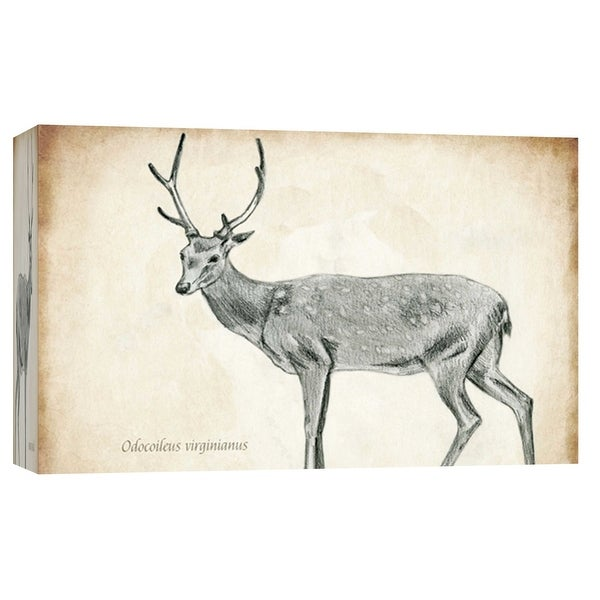 """PTM Images 9-103723 PTM Canvas Collection 8"""" x 10"""" - """"Scientific Deer Sketch 2"""" Giclee Deer Art Print on Canvas"""